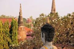 Buddha head and blooming cherries, Ayutthaya. A Buddha head looking at blooming cherries in Wat Putthaisawan, Ayutthaya Royalty Free Stock Photography