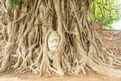 Buddha head in Bo tree root (UNESCO World heritage ) Stock Photo