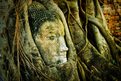 Buddha head. Carved Buddha head in a banyan tree, Ayuthaya (Thailand Stock Image