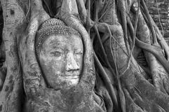 Buddha head covered by roots of a tree Stock Photography