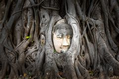 Buddha head embedded in a Banyan tree at Wat Phra Mahatat, Ayutthaya, Thailand, Asia. Buddha head embedded in a Banyan tree at Wat Phra Mahatat in Ayutthaya royalty free stock images