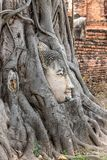 Buddha head embedded in a Banyan tree at Wat Phra Mahatat, Ayutthaya, Thailand, Asia. Buddha head embedded in a Banyan tree at Wat Phra Mahatat in Ayutthaya royalty free stock photo