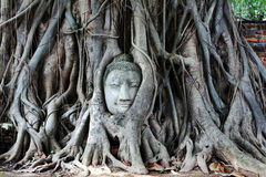 Buddha head. Encased in tree roots at the temple of Wat Mahatat in Ayutthaya ,Thailand Stock Photo