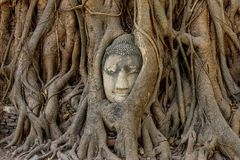 Buddha head. Encased in tree roots at the temple of Wat Mahatat in Ayutthaya, Thailand Stock Images