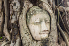Buddha head encased in tree roots at the temple of Wat Mahatat i Royalty Free Stock Photo