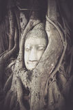 Buddha head encased in tree roots at the temple of Wat Mahatat i Royalty Free Stock Photography