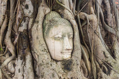 Buddha head encased in tree roots at the temple of Wat Mahatat i Stock Image