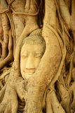 Buddha head encased in tree roots,Thailand Stock Photo