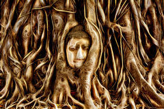 Buddha Head engulfed by tree roots in Ayuthaya, Thailand. Buddha Head engulfed by tree roots in Historic City of Ayutthaya, Thailand Royalty Free Stock Photos
