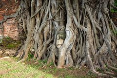 Buddha head entwined with tree roots,Wat Mahathat,Ayutthaya prov royalty free stock photo
