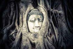 Buddha Head hidden in the tree roots Stock Photos