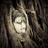 Buddha Head hidden in the tree roots Stock Photo