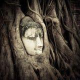 Buddha Head hidden in the tree roots Stock Photo