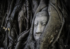BUDDHA HEAD IMAGE IN TRUNK. Thailand  travel Buddha religion Buddhism Stock Image