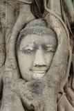 A buddha head inside a tree in Ayudhaya Royalty Free Stock Photos
