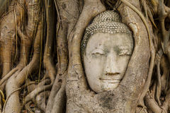 Buddha head in old tree close up Royalty Free Stock Photography
