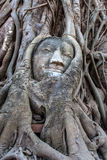 Buddha head overgrown by fig in Wat Mahatat in Ayutthaya Royalty Free Stock Image