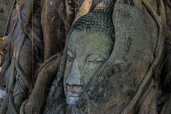 Buddha head overgrown by a tree in Ayuthaya Thaila Royalty Free Stock Photos