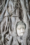 Buddha head overgrown with tree roots in Ayutthaya, Thailand , W Royalty Free Stock Photography
