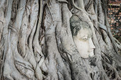 Buddha head overgrown with tree roots in Ayutthaya, Thailand , W Royalty Free Stock Photos
