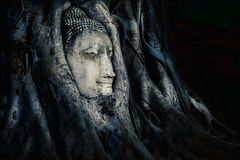 Buddha head overgrown with tree roots, Wat mahathat Ayutthaya, T Stock Image