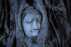 Buddha head overgrown with tree roots, Wat mahathat Ayutthaya, T Stock Photography