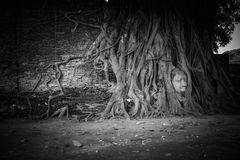 Buddha head overgrown with tree roots, Wat mahathat Ayutthaya, T Royalty Free Stock Photography