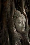 buddha head sandsten Royaltyfria Foton