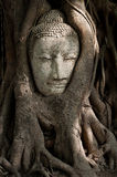 buddha head sandsten Royaltyfri Foto