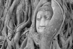 Buddha Head Statue Stock Photos