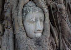 Buddha Head Statue Royalty Free Stock Photo