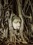 Buddha Head statue embed in tree roots. Ancient sandstone sculpture at Wat Mahathat. Ayutthaya, Thailand Stock Images