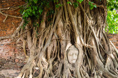 Buddha head statue Stock Photos