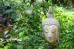 Buddha head statue with nature Royalty Free Stock Photo