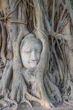 Buddha head statue in a tree Stock Image