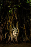 Buddha head statue in tree roots Stock Photo