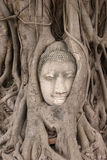 Buddha head. Buddha statues in Thailand under a large tree Royalty Free Stock Photography