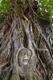 buddha head staty Royaltyfri Foto