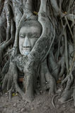 Buddha Head Surrounded by Roots. A stone head of Buddha nestled in the embrace of bodhi tree's roots in Wat Prha Mahathat Temple in Ayutthaya, Thailand Stock Photo
