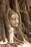 Buddha head surrounded by tree roots in Thailand Royalty Free Stock Photography