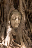 Buddha head surrounded by tree roots in Thailand Royalty Free Stock Image