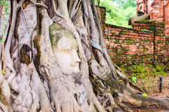 Buddha Head in Thailand Royalty Free Stock Photos