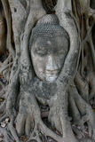 Buddha Head In A Tree Stock Images