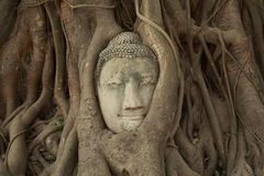 Buddha head in tree Stock Photos
