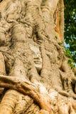 buddha head tree Fotografering för Bildbyråer