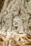 buddha head tree Royaltyfria Foton
