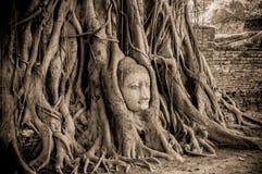 Buddha head in tree of Ayutthaya Stock Photos