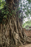 Buddha head in tree of Ayutthaya Stock Image