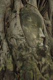 Buddha head in tree in Ayuthaya province Thailand. Royalty Free Stock Image