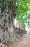 Buddha head in the tree, at Ayutthaya. Stock Image